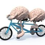 two human brains with arms and legs riding tandem bicycle, 3d illustration