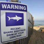 The sightings and the Race Point Beach closure came a day after a man was bitten by a shark at Long Nook Beach in Truro.