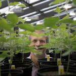 Indigo Ag chief executive David Perry, shown in a company greenhouse in Cambridge, is among Indigo executives who will be based in Memphis.