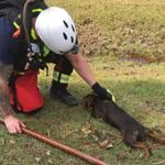 Members of the Southeastern Mass. Technical Rescue Team spent much of the week rescuing pets from flood waters in North Carolina.