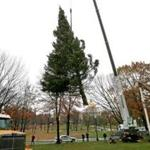 The annual gift of an evergreen Christmas tree from Nova Scotia arrived Tuesday and was set up for the holidays.