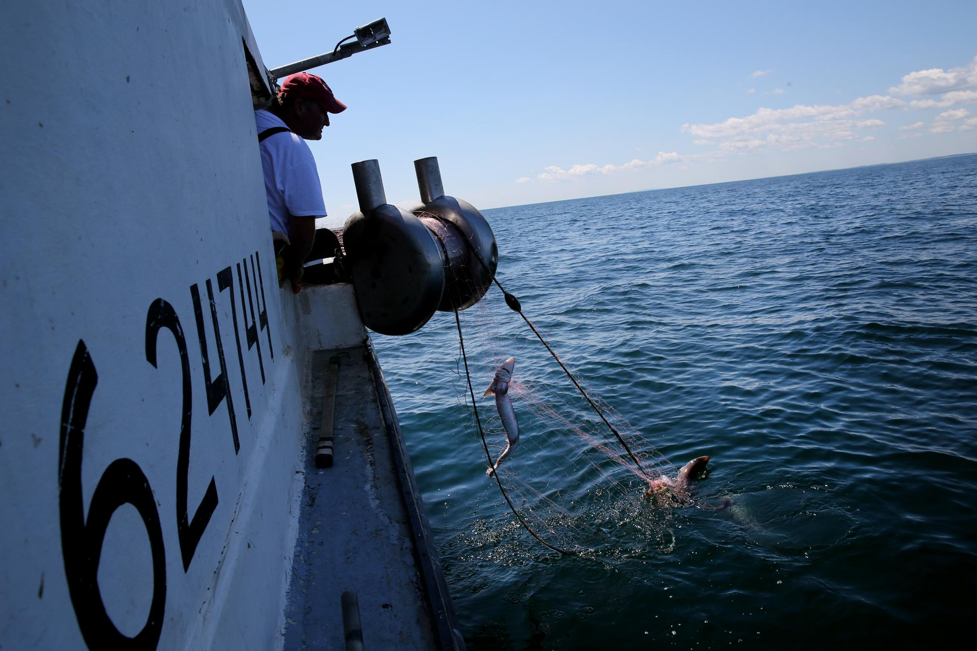 Captain Phil Lynch pulled in his gillnet while fishing for spiny dogfish during a training trip near Scituate.