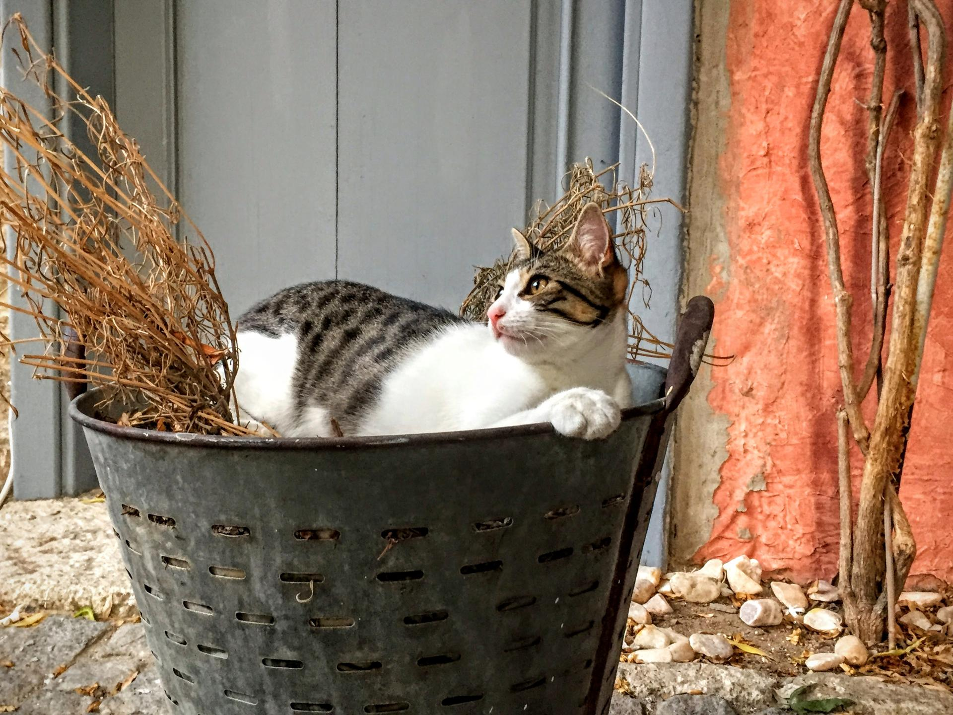 03muther Credit: Christopher Muther, Globe Staff Alcati cat: A cat in Alacati, Turkey, makes a bed out of a potted dead plant.