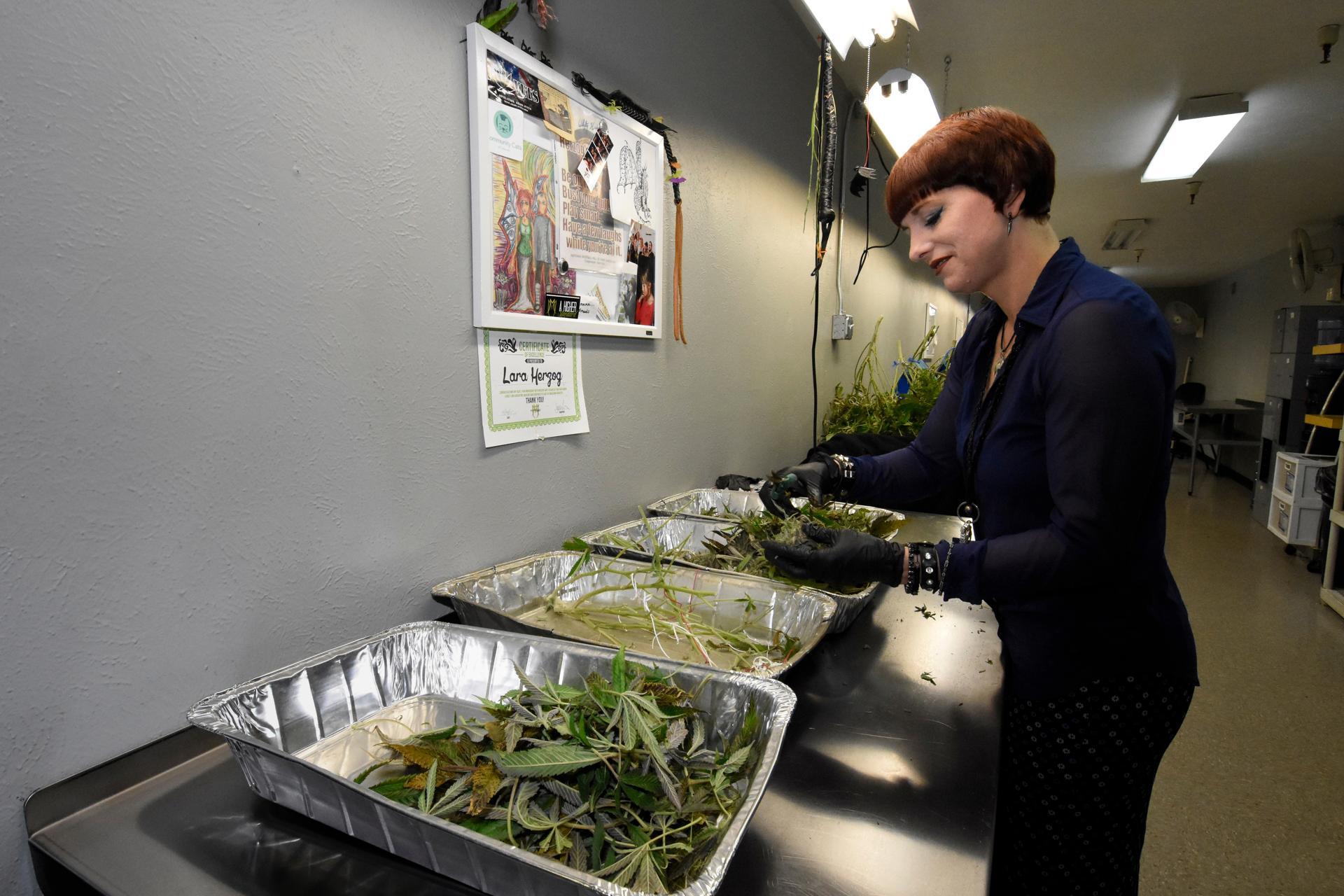 marijuana essay hook