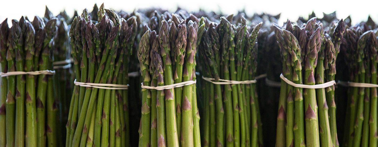 06/10/17 -- Concord, MA -- New bundles of freshly harvested asparagus are seen at Verrill Farm on June 10, 2017, in Concord, Massachusetts. (Kayana Szymczak for The Boston Globe)