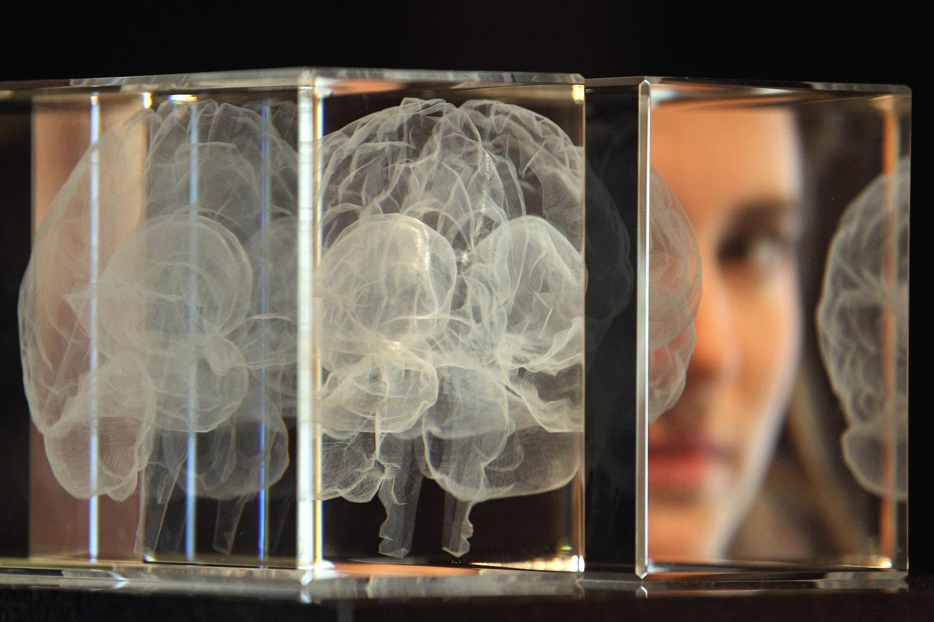 LONDON, ENGLAND - MARCH 27: Wellcome trust employee Zoe Middleton poses behind an artwork entitled 'My Soul' by Katharine Dowson, which consists of a laser etched lead chrystal glass formation in the shape of a brain, and was created using the artists own MRI Scan, at Wellcome Collection on March 27, 2012 in London, England. The exhibit makes up part of the Wellcome Collection's major new exhibition, 'Brains' which includes slices of Einstein's brain, 3000 year old trepanned skulls, ancient Egyptian mummified brains and brains in jars, and opens to the public from March 29 June 17, 2012. (Photo by Dan Kitwood/Getty Images)