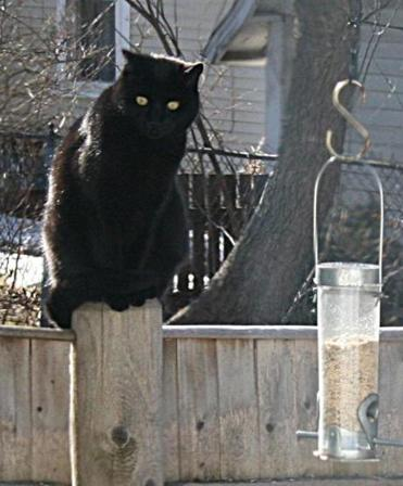 Lydia Lodynsky, who is pushing for restrictions on roaming cats, recorded a cat waiting by a feeder in her Concord back yard, a popular stop for hungry birds.