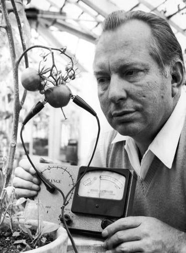 American science fiction writer L. Ron Hubbard (1911 - 1986), founder of the Church of Scientology, uses his Hubbard Electrometer (patent pending) to determine whether tomatoes experience pain, 1968. His work led him to the conclusion that tomatoes 'scream when sliced'. (Photo by Scott Lauder/Evening Standard/Hulton Archive/Getty Images)
