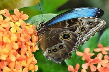 View hundreds of butterflies at the Museum of Science's Butterfly Garden, overlooking the Charles River..