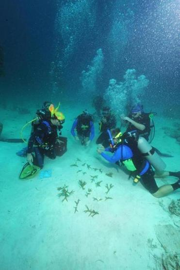 Divers gently collect morsels of hard coral just picked from an underwater nursery for replanting on Dry Rocks Reef.