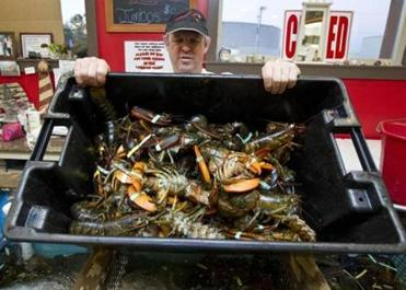 Peter Dawson Sr. with freshly caught lobsters.