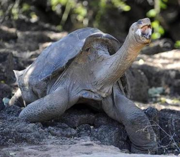 Lonesome George