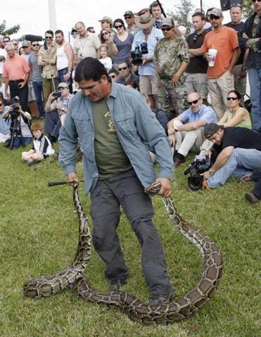 A man demonstrated how to handle a 13-foot, 85-pound Burmese python in Davie, Fla. Saturday.