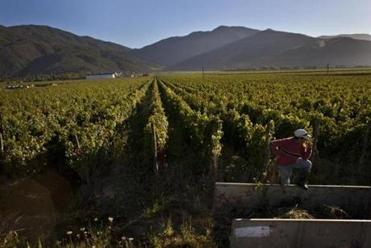 A worker rested at a vineyard owned by Edward Tutunjian, about 120 miles south of Santiago, Chile. Tutunjian was drawn to Chile by a cabbie who praised his homeland.