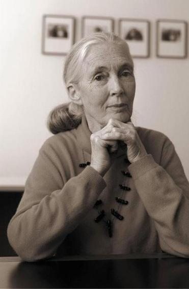 Jane Goodall blends reminiscence, natural history, and a plea on behalf of the natural world.