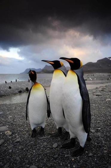 """Penguins 3D'' was shot on South Georgia in the southern Atlantic Ocean."