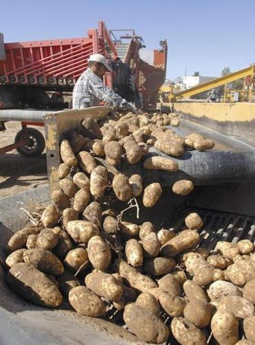 A wholesale grocery cooperative says consortium of potato farmers reduces supply to inflate demand — and prices.