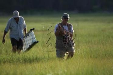 Rob Bierregaard and David Rimmer will band a young Osprey so they can monitor it's migration.