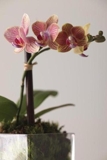 Research how frequently your variety of orchid should be watered.