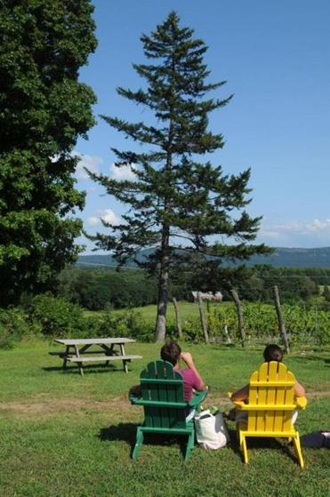 At Black Birch Winery in Southampton, a view over the vines at the distant Seven Sisters.