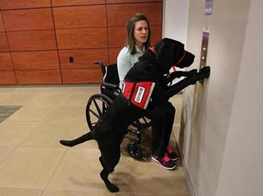 Jessica Kensky's service dog, Rescue, is trained to ring for the elevator.