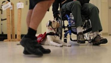 At the National Education for Assitance Dog Services, clients got trained with their service dog.