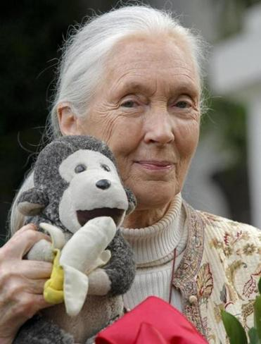 Chimpanzee specialist Jane Goodall carries a stuffed monkey wherever she travels.