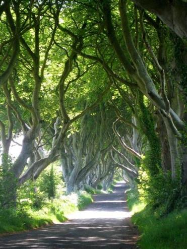 "In Northern Ireland, the ""Dark Hedges"" avenue of beech trees near Ballymoney that show up in ""Game."""