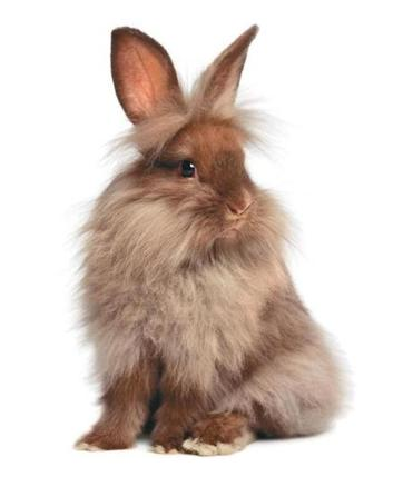 fa36c76c3ce Rabbits are cute (but make lousy Easter gifts) - The Boston Globe