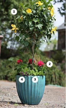 Great Plants For Container Gardens Window Boxes The