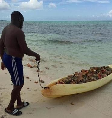 Fresh-caught conch is brought to the beach.