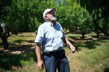 Frank W. Carlson looked at one of his peach orchards.