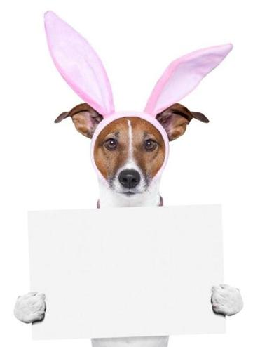 easter dog with bunny ears holding a placard