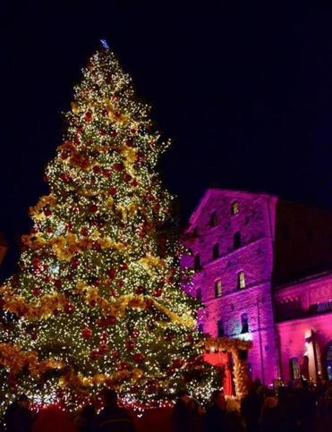 One of the focal points of the Toronto Christmas Market is the massive tree and beautifully lit buildings.