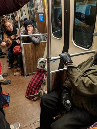 Dog Gets Separated From Owner When Leash Gets Stuck In Door On Mbta
