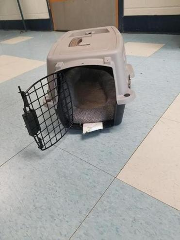 A 1-year-old Chihuahua was found abandoned in a dog carrier at a Brockton animal shelter Tuesday morning.