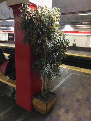 A mysterious fake tree recently appeared on the Red Line's center platform at Park Street Station.