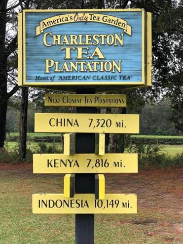 The Charleston Tea Plantation is on Wadmalaw Island, about a half hour south of Charleston. It is the country's only tea plantation.