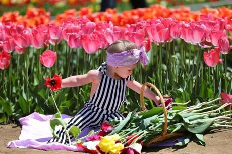 Lilly McAloon, 10 months, of Seeking, played with a basket of tulips.