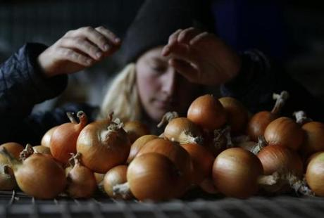 South Burlington, VT--10/2/2018-- A student sorts onions at UVM's farmer-training program. (Jessica Rinaldi/Globe Staff) Topic: 05farmers Reporter: