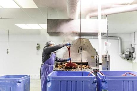 RICHMOND, MAINE - November 29, 2018 : Larry Thach loads lobsters to be cooked in a computerized steam convection oven. (Greta Rybus for the Boston Globe)