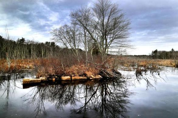 Franklin-01/31/2017 Alan Earls took officials on a tour of the Charles River Meadowlands. Mine Brook in Franklin, where a trolly used to cross the body of water over a small bridge. John Tlumacki/The Boston Globe(regional)