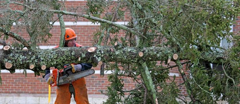 A Duxbury town employee removed a fallen tree in front of the Duxbury High school.