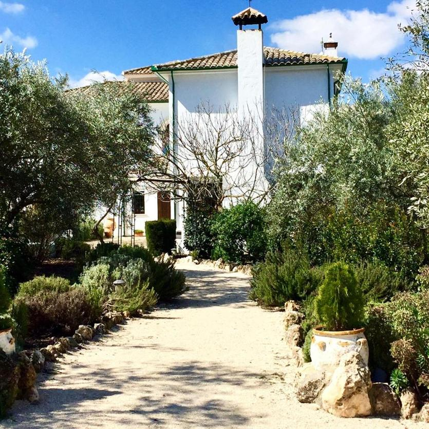 Casa Olea sits in an olive grove without commerce of any kind around it.