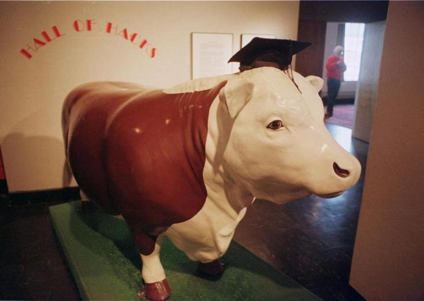 A plastic cow, known as Ferdi, wears a graduation mortar board, Jan. 17, 2001, at the Hall of Hacks exhibit of the Massachusetts Institute of Technology in Cambridge, Mass. Ferdi was stolen from the lawn in front of the Hilltop Steakhouse in Saugus and placed atop MIT's Great Dome in 1981. (AP Photo/Jared Leeds) 05MIThack