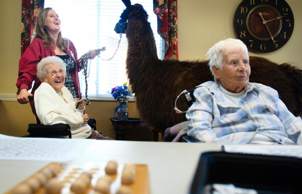 Nikki Gibbons and Travis the llama paid a visit to Gert Diette, a resident at Life Care Center of Nashoba Valley, in Littleton.
