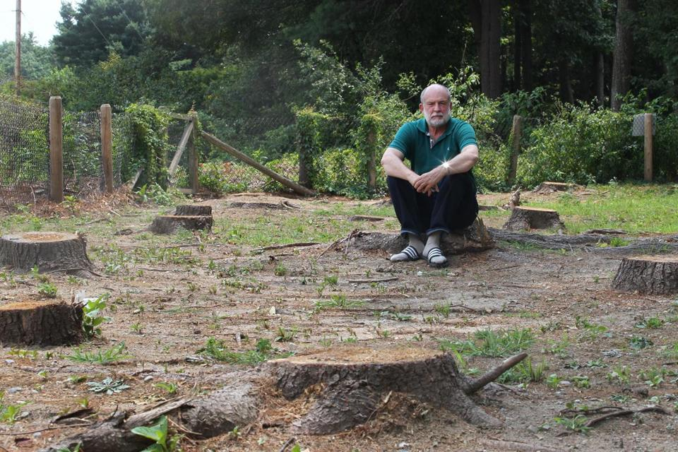 Richard Salus sat on one of the tree stumps left behind at his Sudbury home.