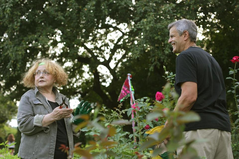 China Altman and Carl Foster in one of the four rose beds at the Public Garden last week. Altman and her fellow volunteers are called the Rose Brigade.