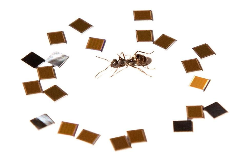 The company's icrochips were placed around an ant for size comparison.