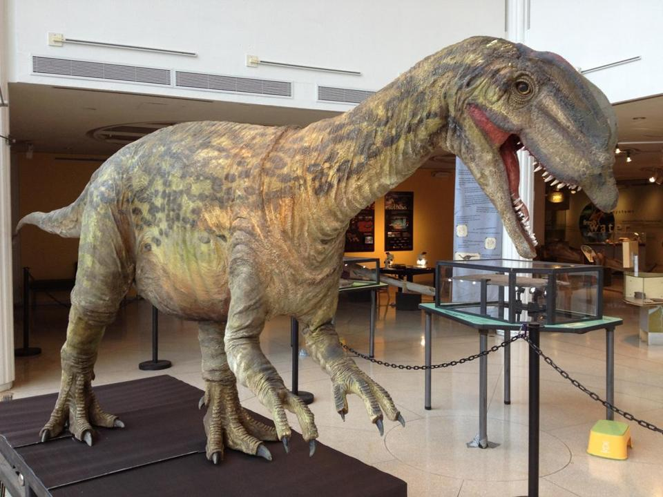 Life-size replica of a dilophosaurus is one of three full-scale dinosaur models on display at the EcoTarium in Worcester.